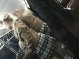 手コキ 間違えたフリして金髪ハイスクールバスに乗り込んでヤられた